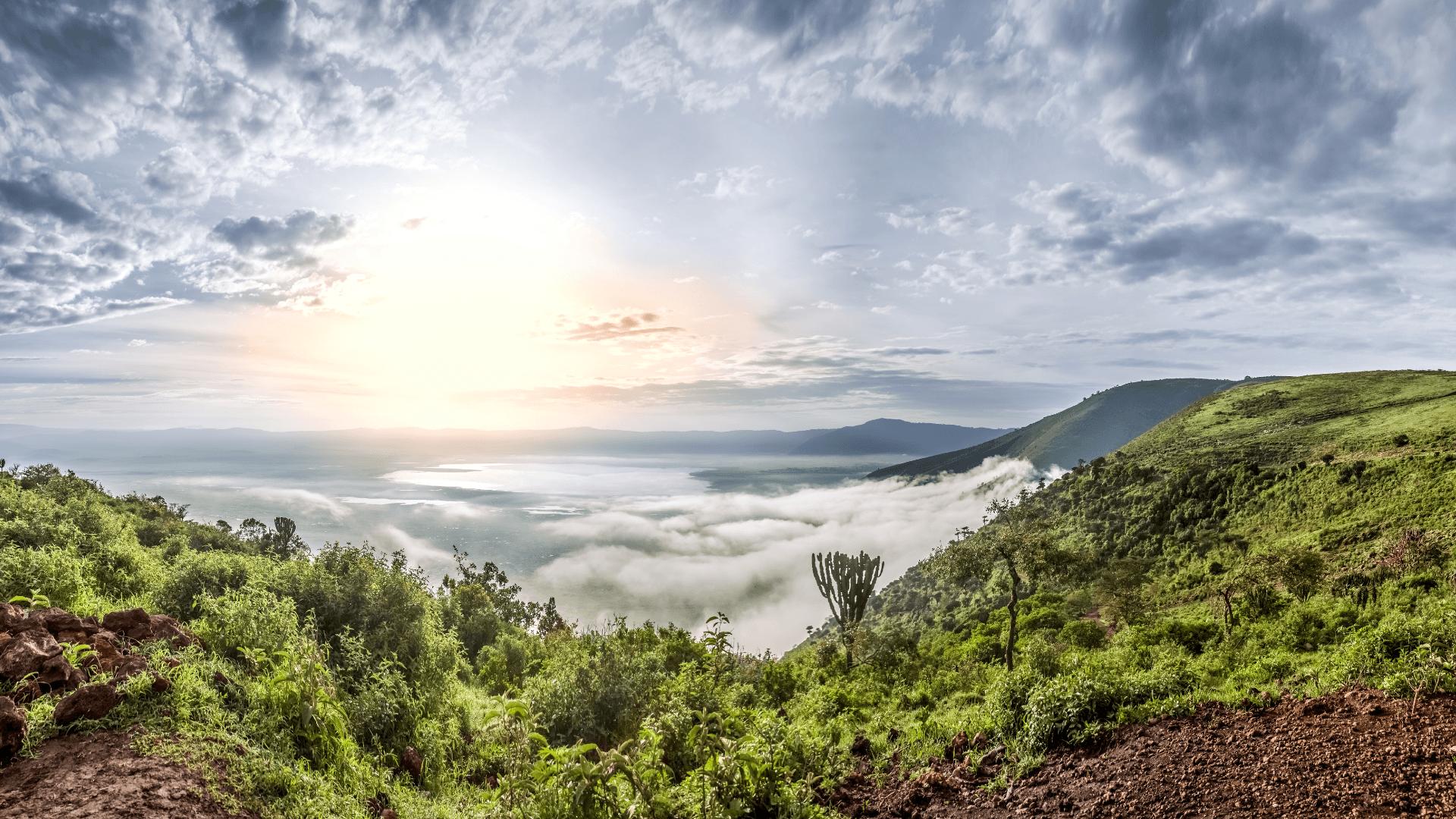 TANZANIAN PEABERRY