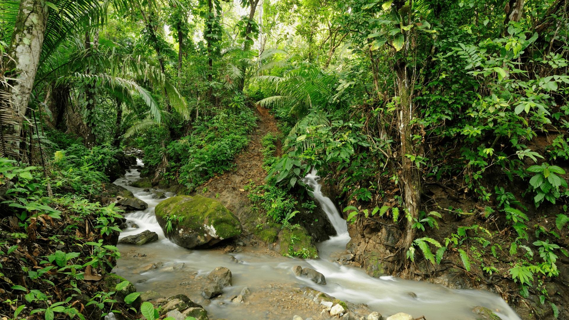 COLOMBIAN ROAST